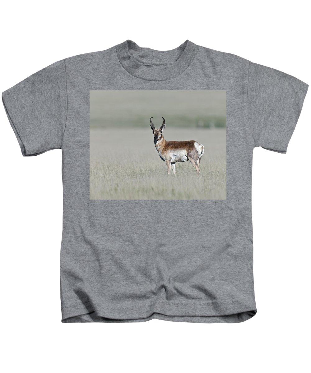 Antelope Buck Kids T-Shirt featuring the photograph Antelope Buck by Gary Langley