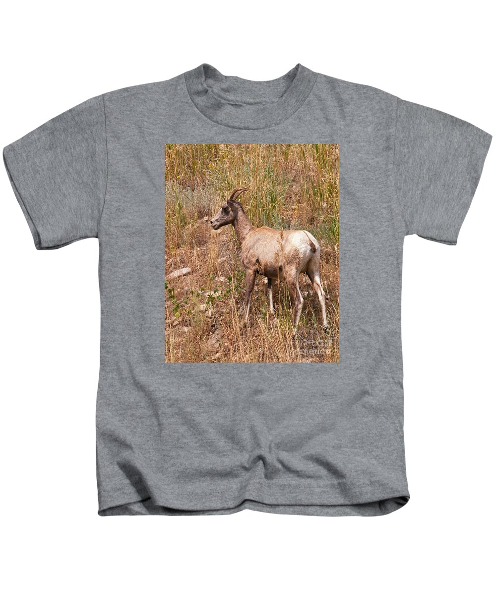 Sheep Kids T-Shirt featuring the photograph Big Horn Sheep Ewe by Timothy Flanigan and Debbie Flanigan Nature Exposure