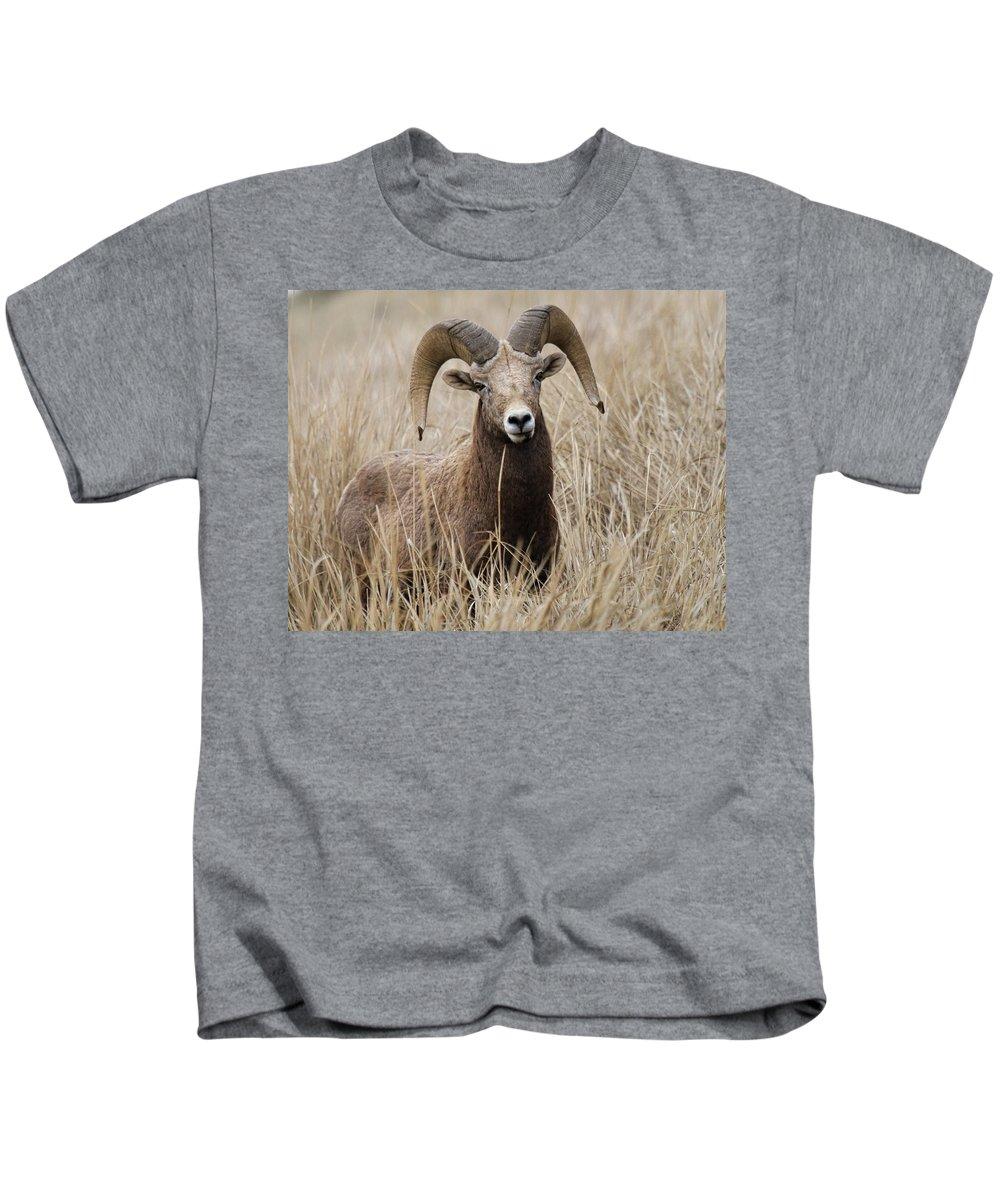 Bighorn Sheep Kids T-Shirt featuring the photograph Bighorn Grassland by Steve McKinzie