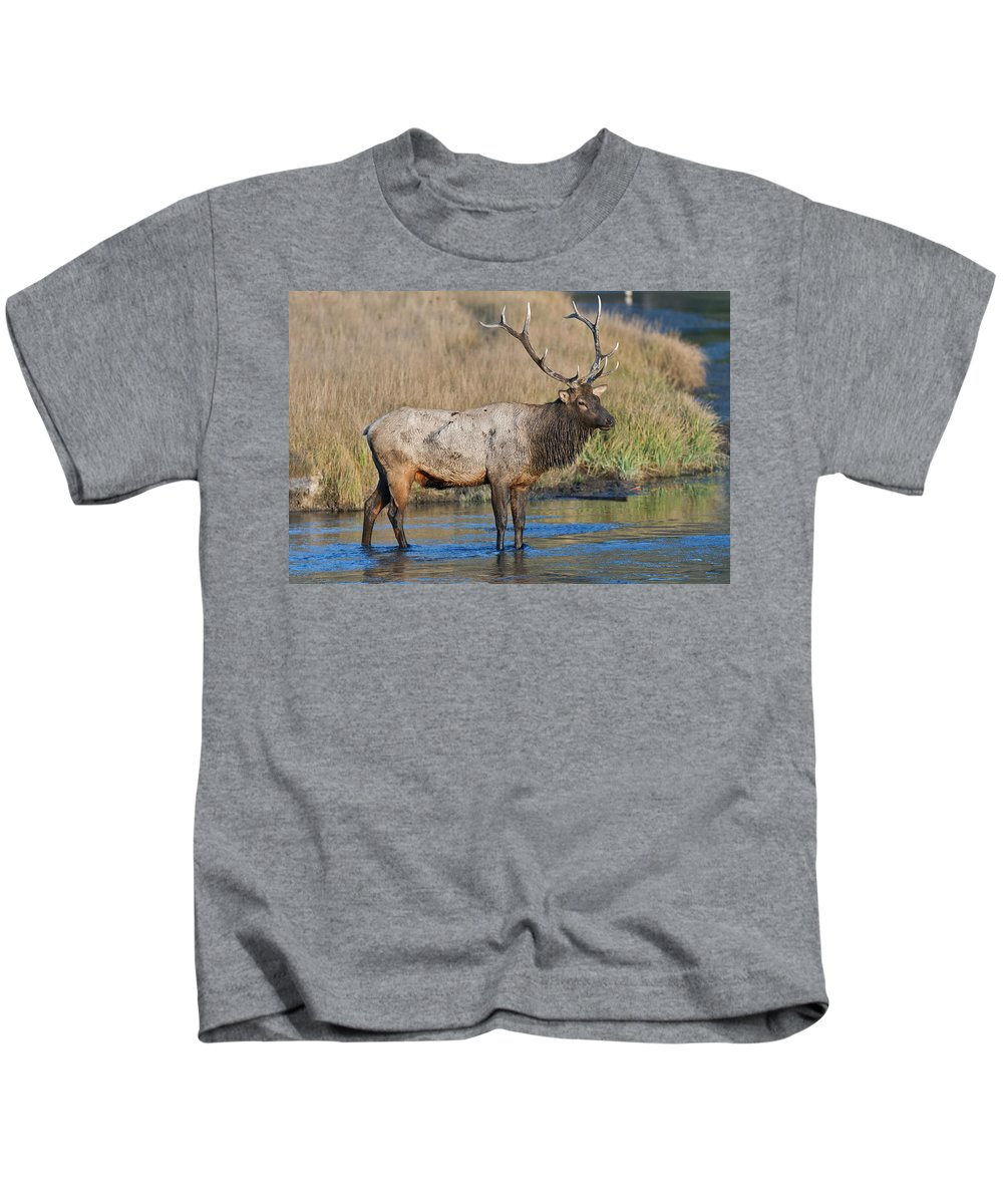 Crossing River Kids T-Shirt featuring the photograph Bull Elk Crossing River by Gary Langley