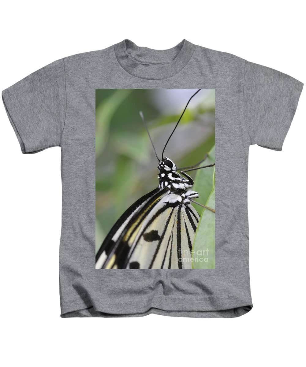Butterfly Kids T-Shirt featuring the photograph Butterfly by Jenny Potter