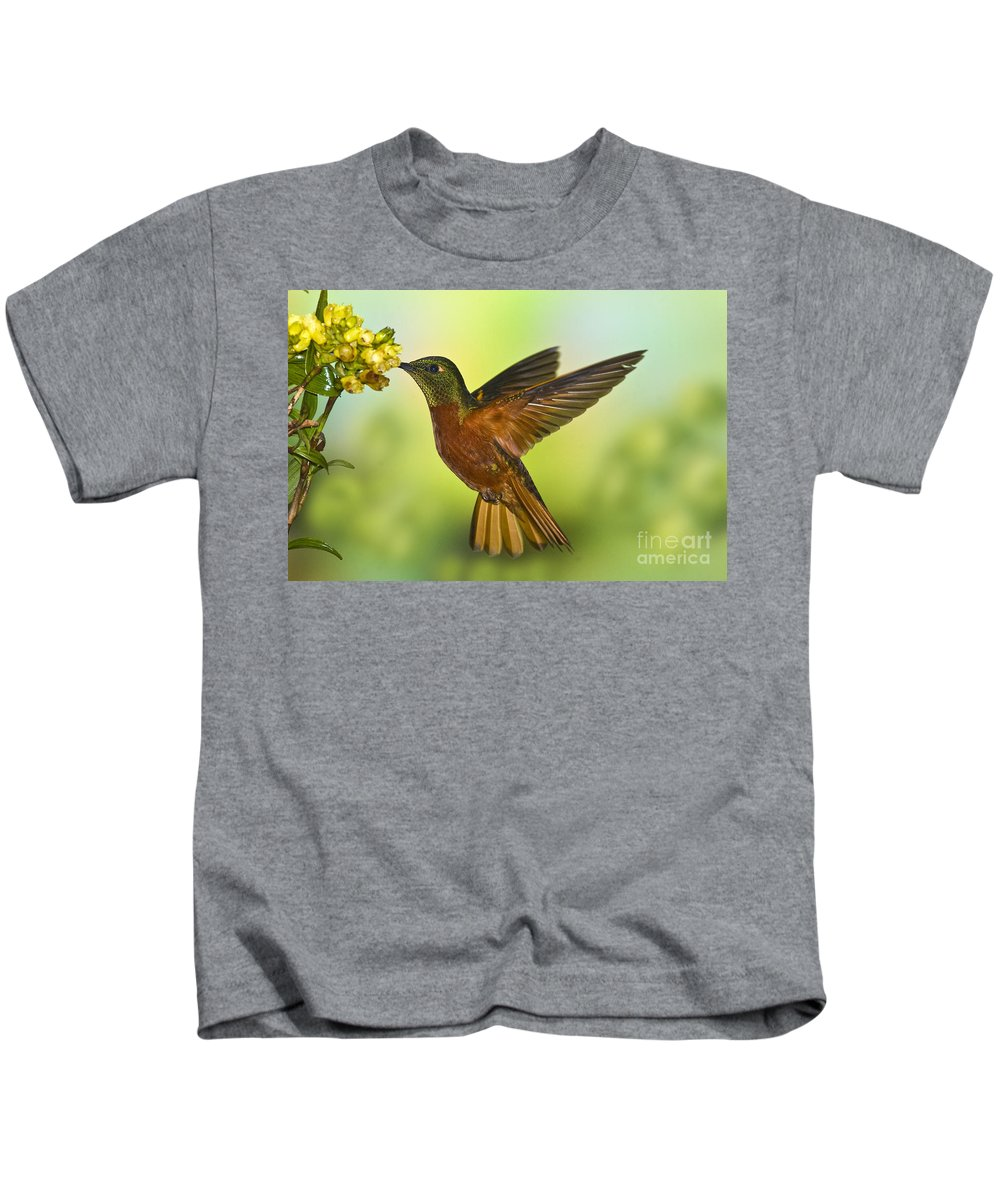 Animal Kids T-Shirt featuring the photograph Chestnut-breasted Coronet by Anthony Mercieca