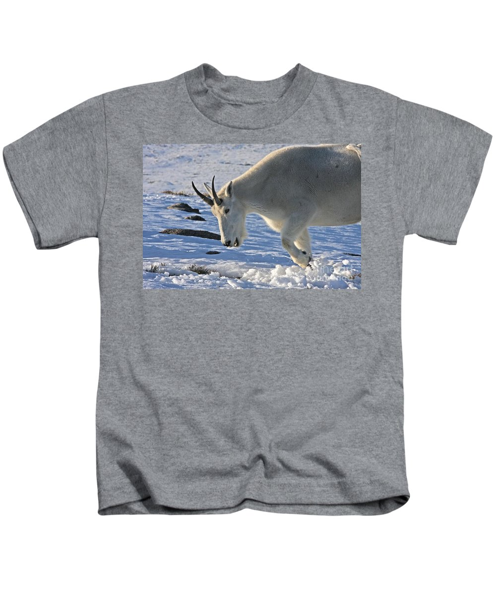 Mountain Goat Kids T-Shirt featuring the photograph Digging For Dinner by Jim Garrison