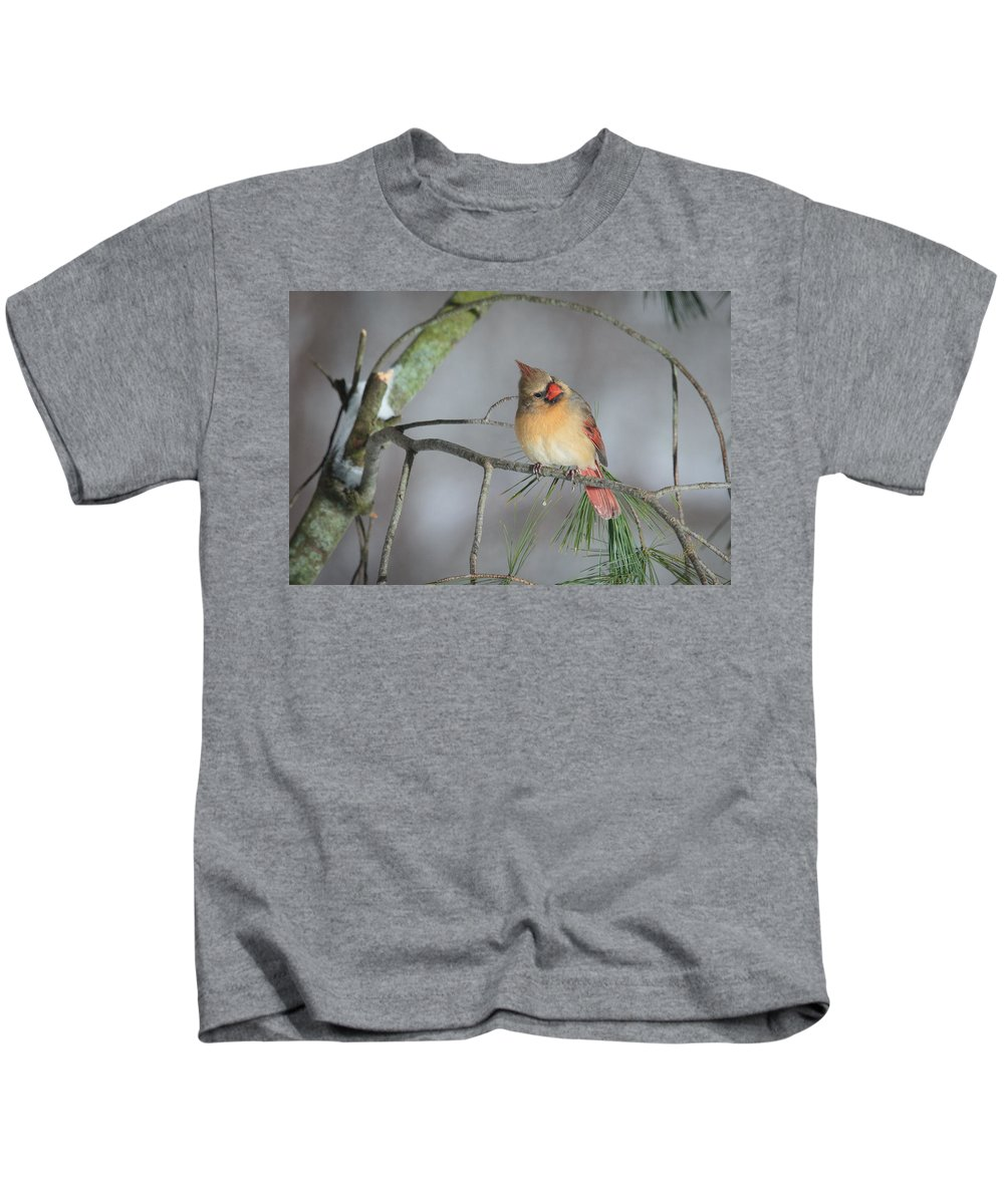Female Kids T-Shirt featuring the photograph Female Cardinal by Everet Regal