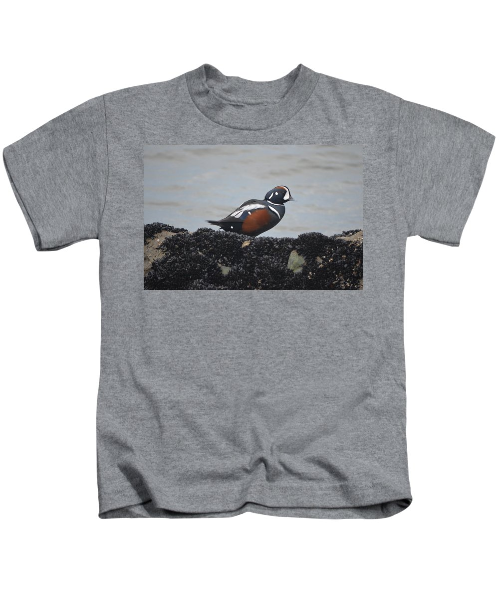 Harlequin Duck Kids T-Shirt featuring the photograph Harlequin Duck by James Petersen