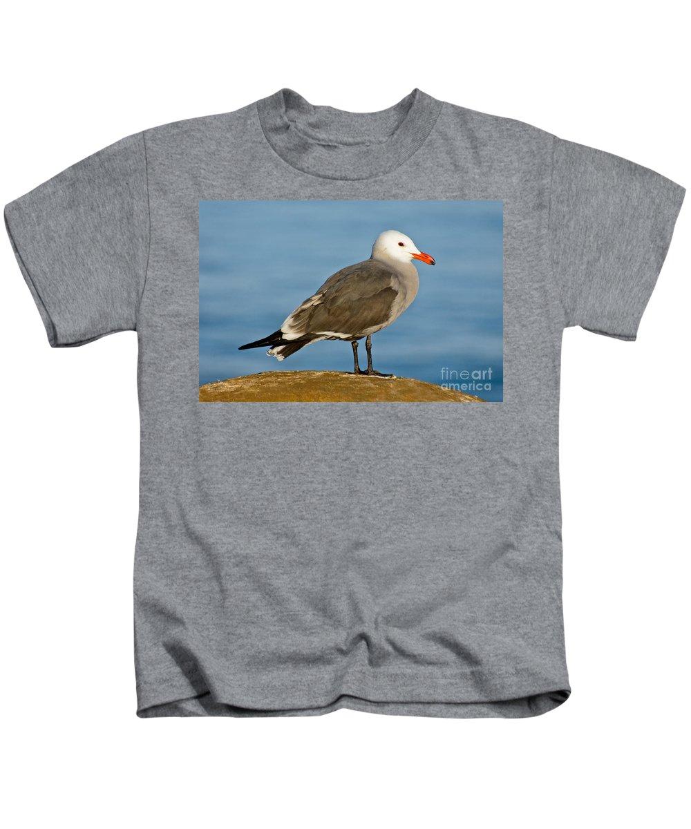 Heermann's Gull Kids T-Shirt featuring the photograph Heermanns Gull On Rock by Anthony Mercieca