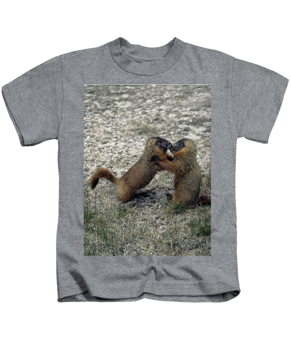 Yellow Bellied Marmot Kids T-Shirt featuring the photograph 4m09150-02-marmot Fight by Ed Cooper Photography