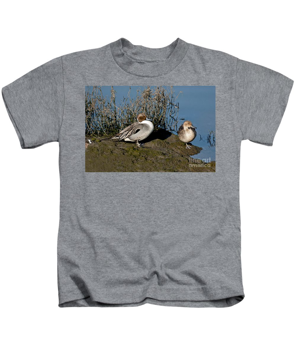 Northern Pintail Kids T-Shirt featuring the photograph Northern Pintail Pair At Rest by Anthony Mercieca