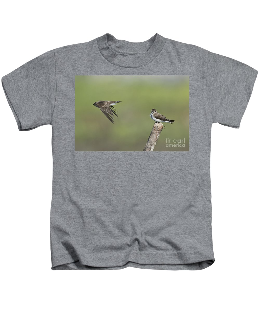 Northern Rough-winged Swallow Kids T-Shirt featuring the photograph Northern Rough-winged Swallows by Anthony Mercieca