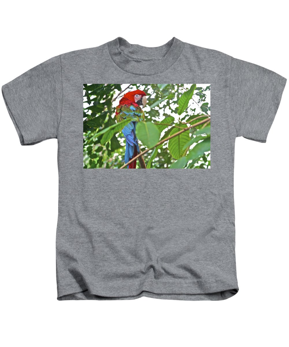 Animal Kids T-Shirt featuring the photograph Parrot by SC Heffner