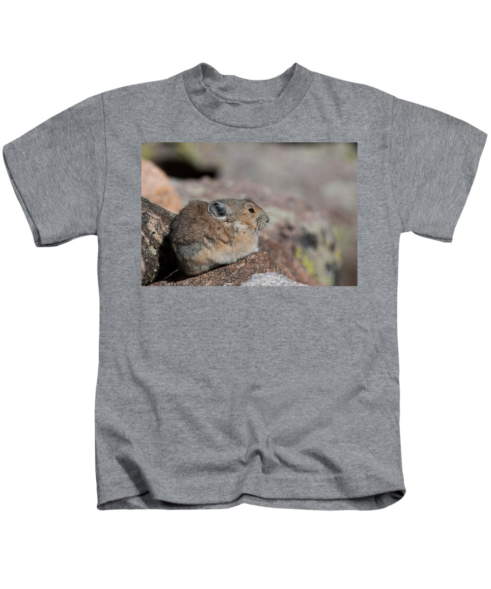 Pika Kids T-Shirt featuring the photograph Pika In The Sun by Cascade Colors
