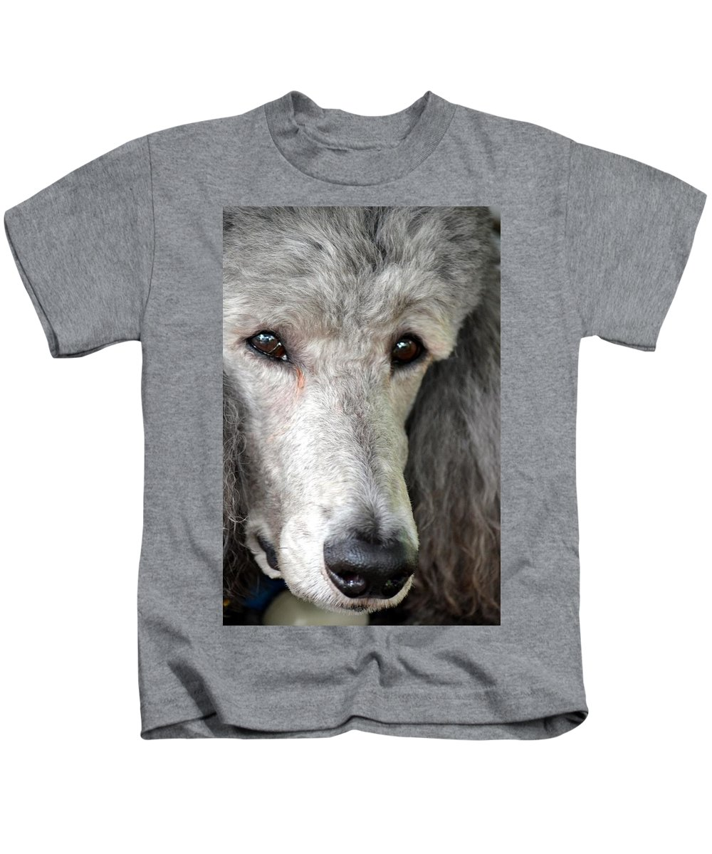 Portrait Kids T-Shirt featuring the photograph Portrait Of A Silver Poodle by Maria Urso
