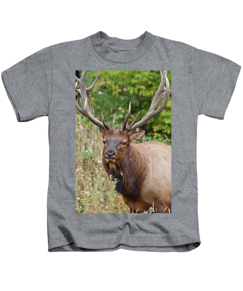 Roosevelt Elk Kids T-Shirt featuring the photograph Racked Roosevelt Elk by Greg Nyquist