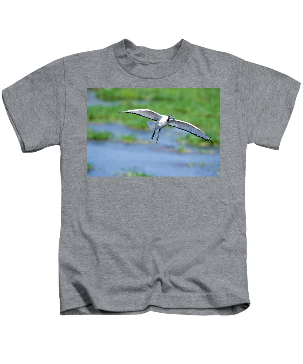 Photography Kids T-Shirt featuring the photograph Sacred Ibis Threskiornis Aethiopicus by Panoramic Images