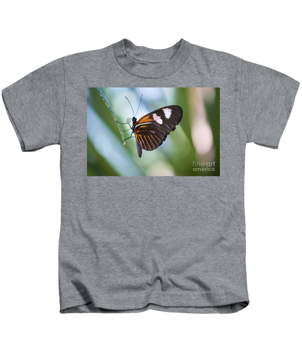Farfalla Kids T-Shirt featuring the photograph The Butterfly Effect by Juli Scalzi