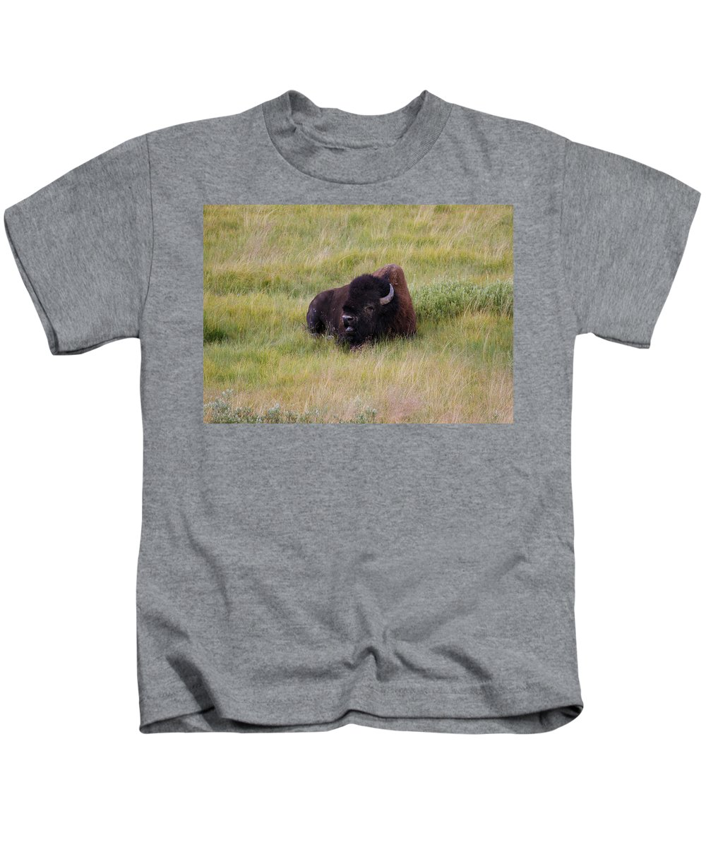 Buffalo Kids T-Shirt featuring the photograph The Old One by Steve McKinzie