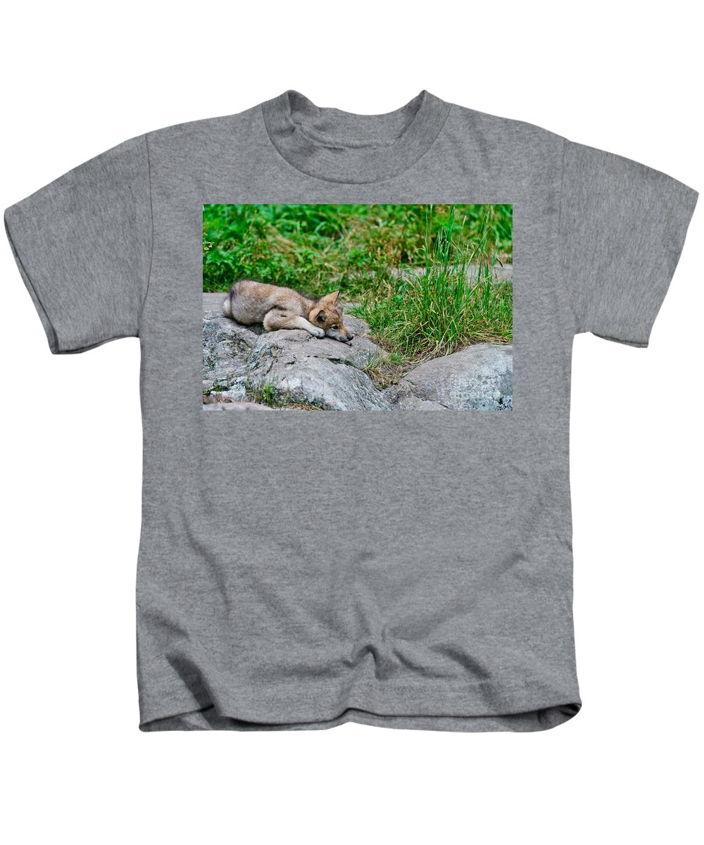 Timber Wolf Kids T-Shirt featuring the photograph Timber Wolf Pictures 329 by Wolves Only