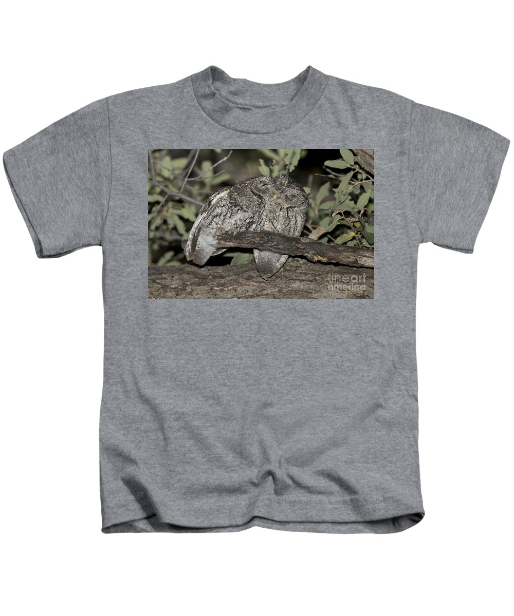 Whiskered Screech Owl Kids T-Shirt featuring the photograph Whiskered Screech Owls by Anthony Mercieca