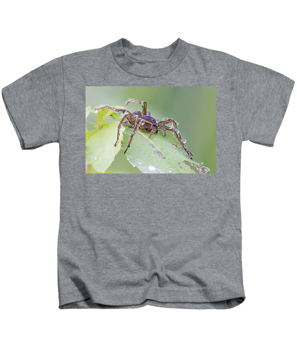 Spider Kids T-Shirt featuring the photograph Wolf Spider In Dew by Mircea Costina Photography