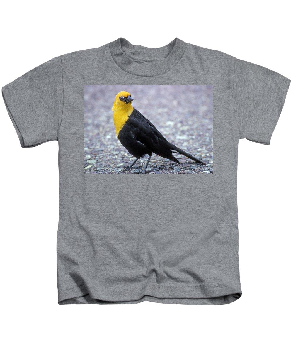 Yellow Headed Blackbird Kids T-Shirt featuring the photograph 4m09157-02-yellow Headed Blackbird by Ed Cooper Photography