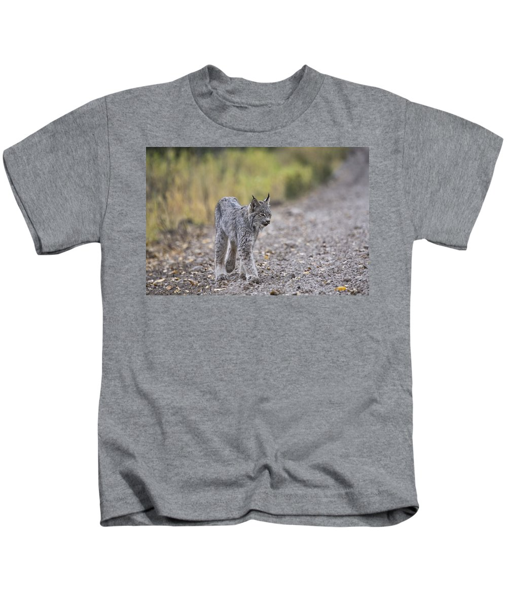 Canada Kids T-Shirt featuring the digital art Rocky Mountain Lynx by Mark Duffy