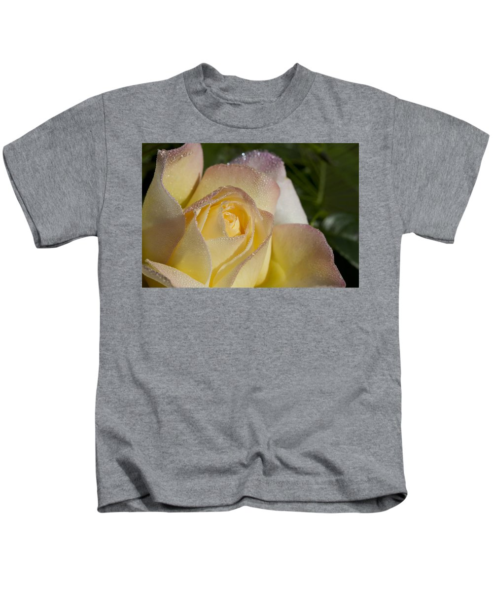 Peace Rose Kids T-Shirt featuring the photograph Early Morning Peace Rose by Kathy Clark