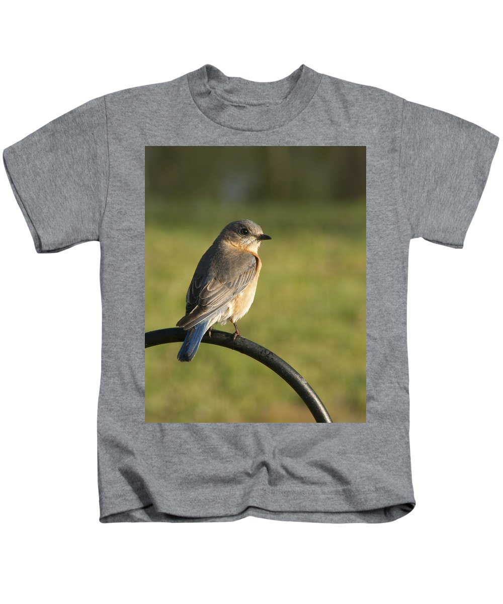 Sialia Sialis Kids T-Shirt featuring the photograph The Bluebird Of Happiness by Kathy Clark