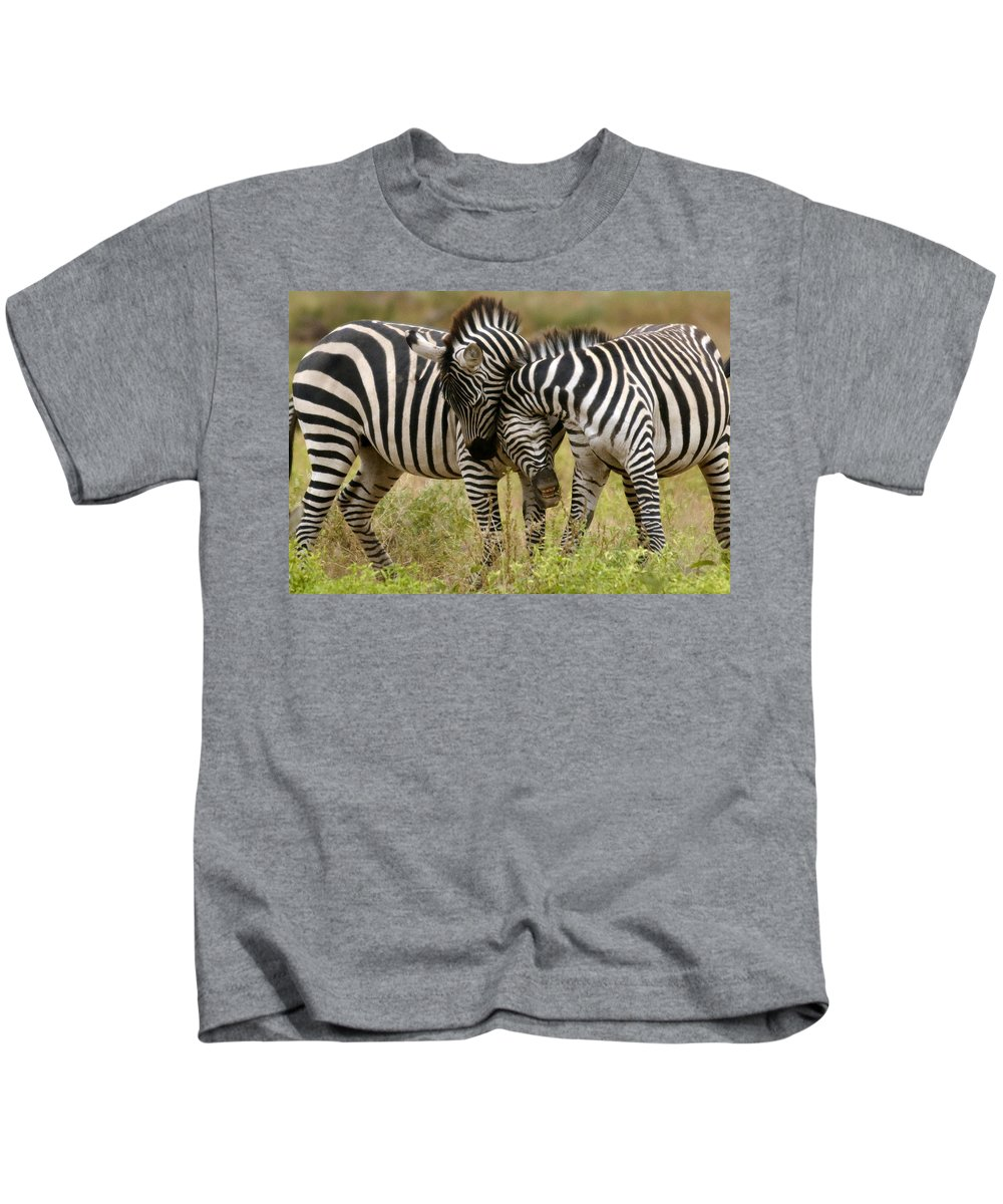 Africa Kids T-Shirt featuring the photograph Zebra Hug by Jack Daulton
