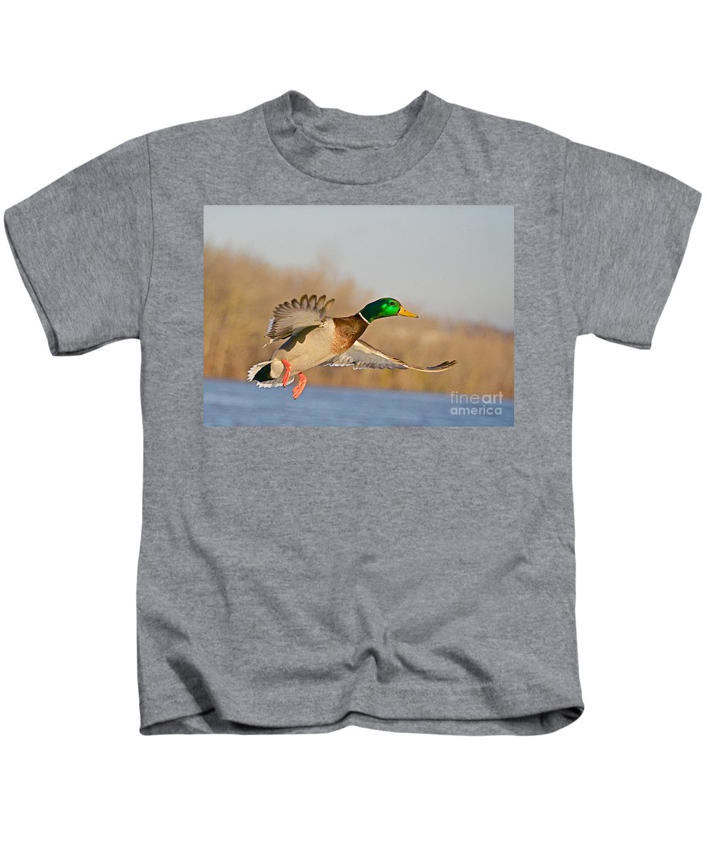 Mallard Kids T-Shirt featuring the photograph Fly By by Robert Pearson