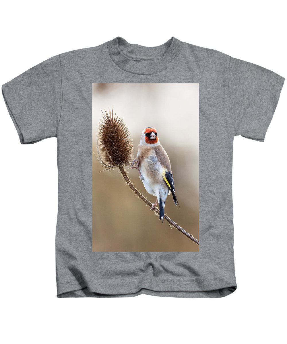 Goldfinch Kids T-Shirt featuring the photograph Goldfinch On Teasle by Bob Kemp
