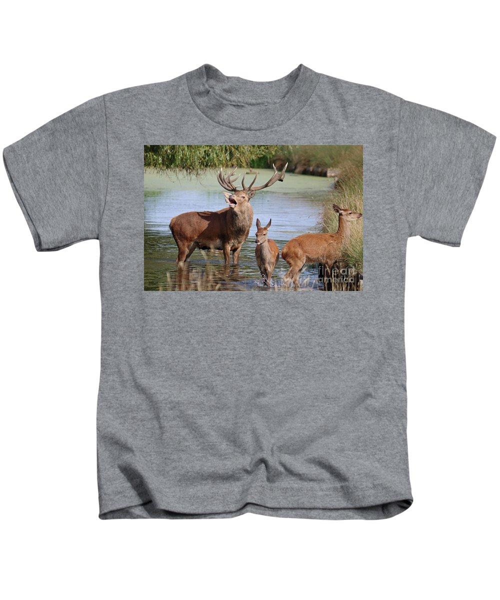 Red Deer In Bushy Park London Kids T-Shirt featuring the photograph Red Deer In Bushy Park London by Julia Gavin