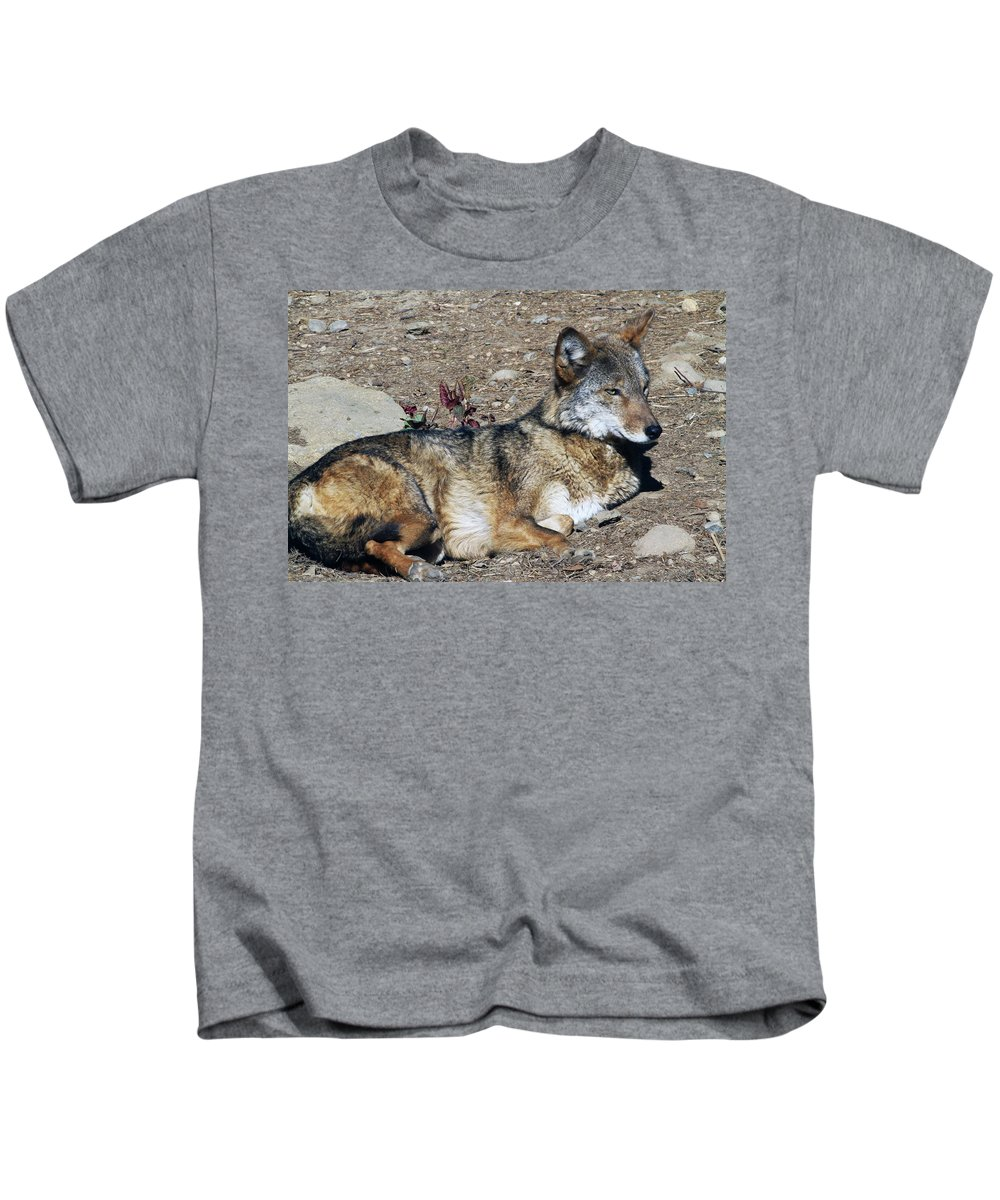 Wolf Kids T-Shirt featuring the photograph Resting Wolf by Karol Livote
