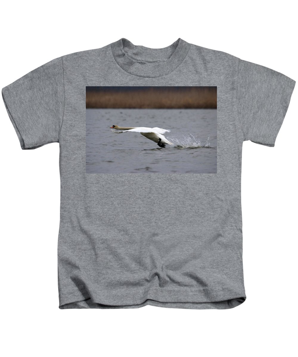 Swan In Flight Kids T-Shirt featuring the photograph Swan During Take Off by Cliff Norton