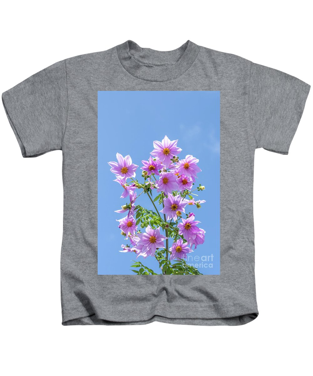 Asia Kids T-Shirt featuring the photograph Fully Bloomed Pink Dahlia Imperialis At Garden In November by Eiko Tsuchiya