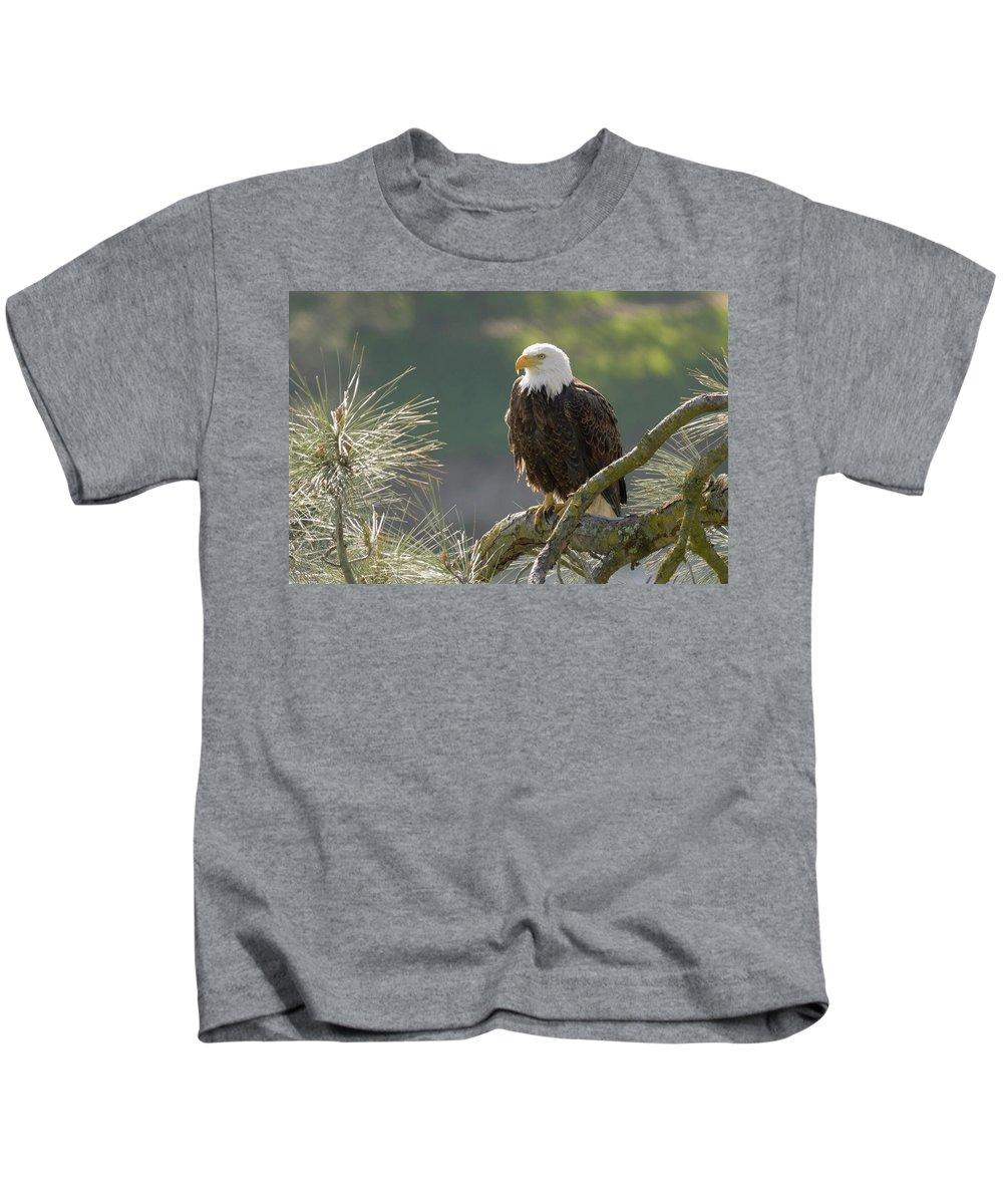 Birds Kids T-Shirt featuring the photograph Bald Eagle by Doug Herr