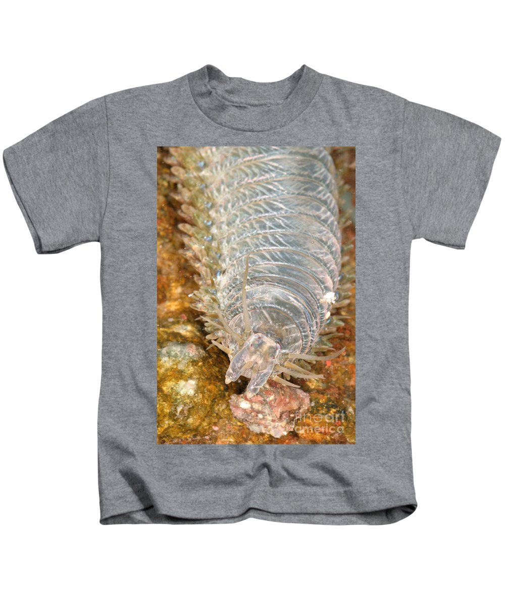 Fauna Kids T-Shirt featuring the photograph Clam Worm by Ted Kinsman