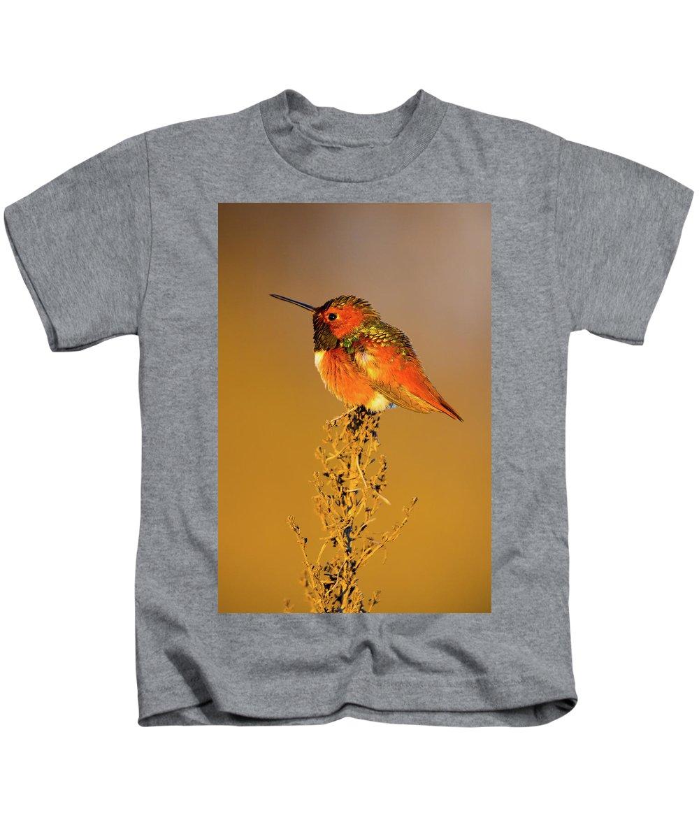Allen's Hummingbird Kids T-Shirt featuring the photograph Allen's Hummingbird II by Brian Knott Photography