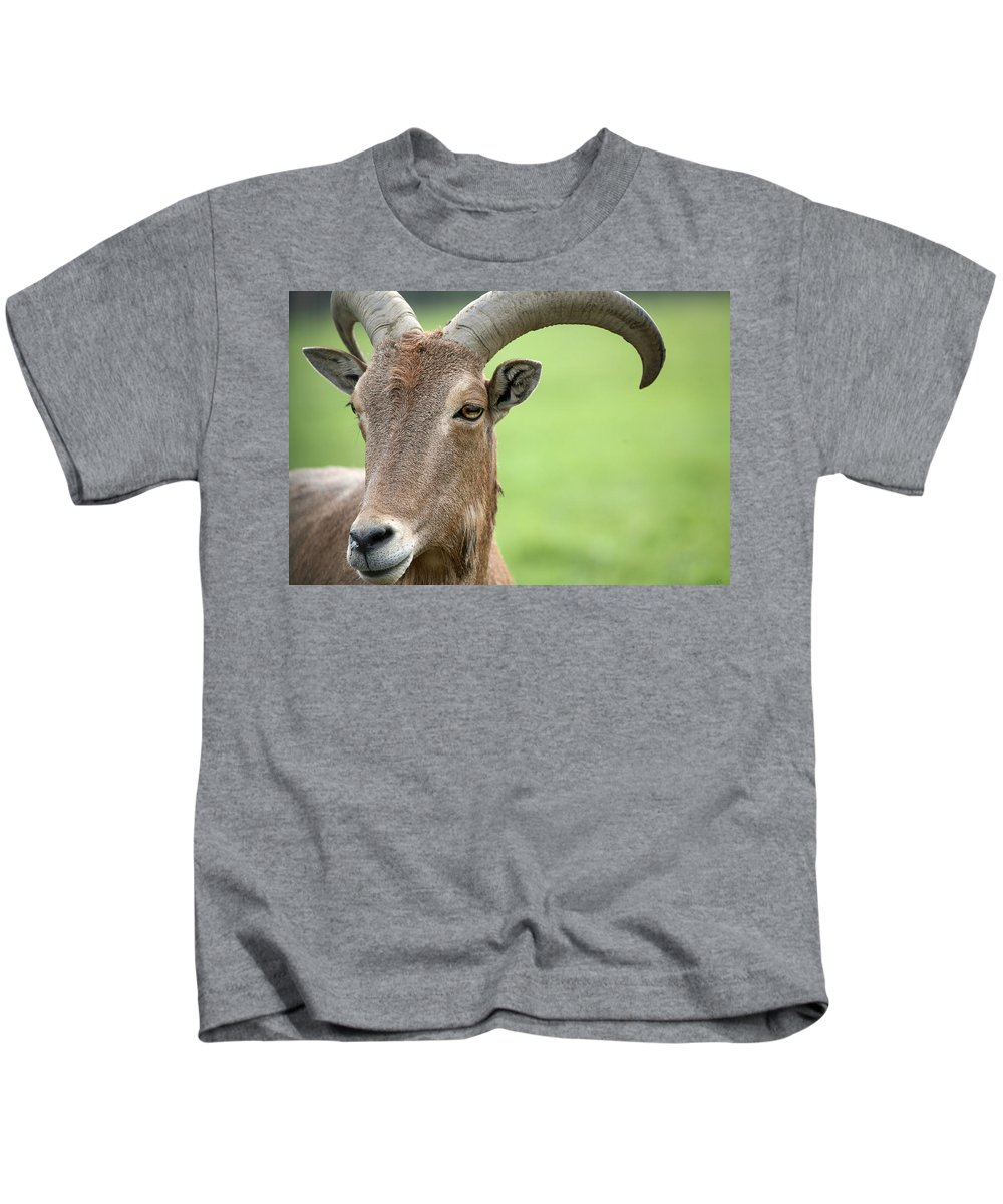 Aoudad Kids T-Shirt featuring the photograph Aoudad by Karol Livote