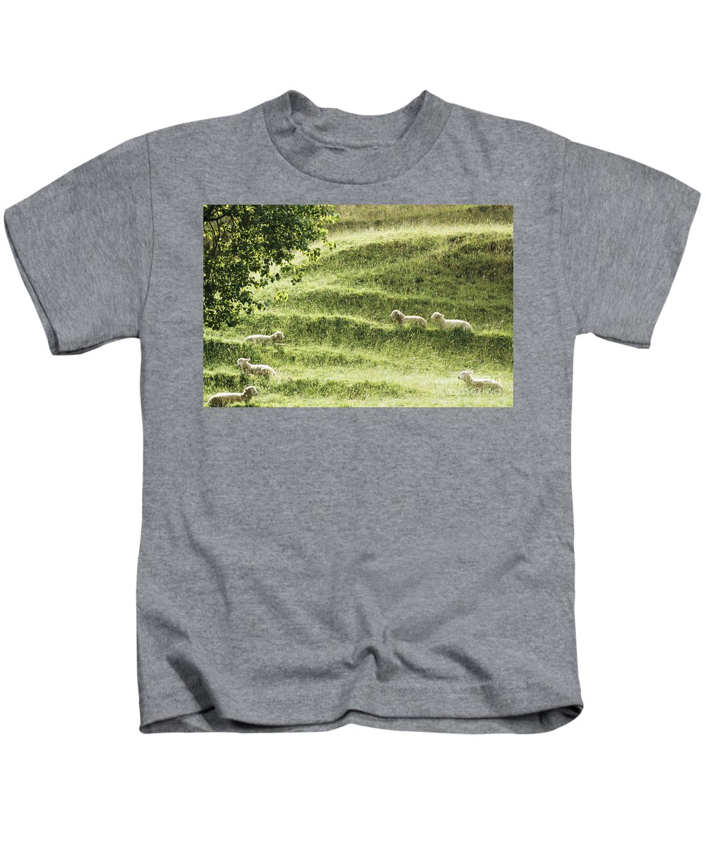 Animal Art Kids T-Shirt featuring the photograph Auckland Sheep Grazing by Larry Dale Gordon - Printscapes