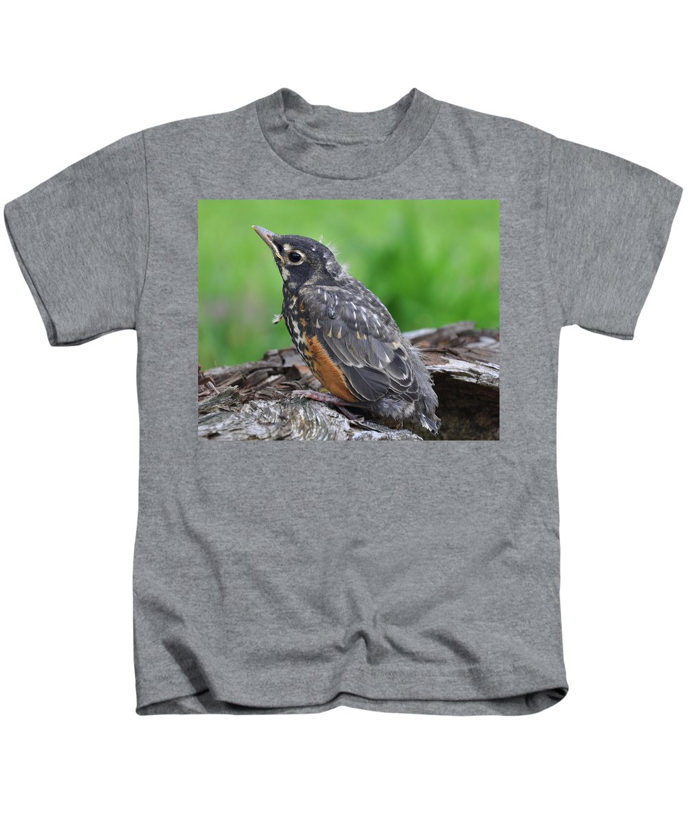 Nature Kids T-Shirt featuring the photograph Baby Robin by Brittany Horton