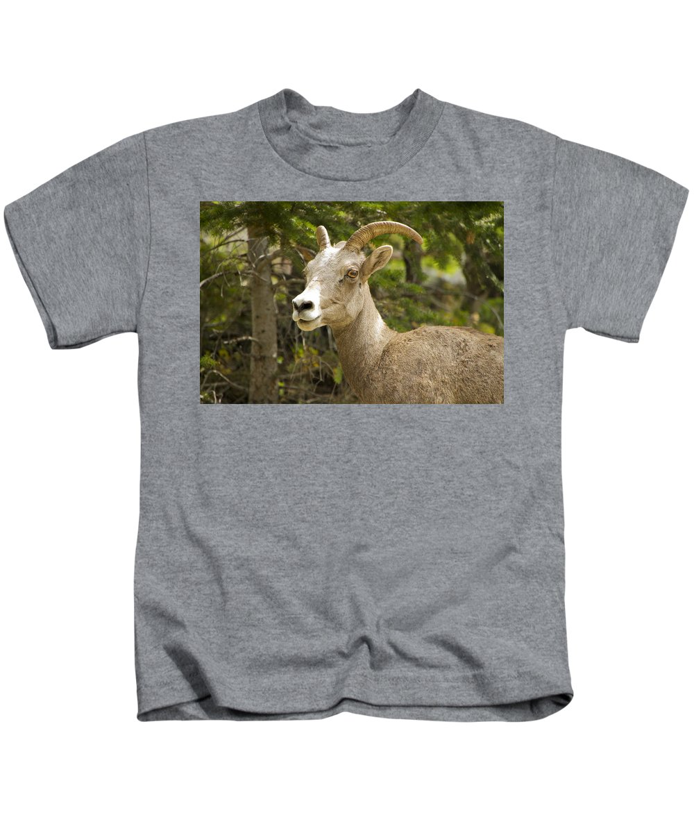 Glacier Kids T-Shirt featuring the photograph Big Horn Sheep Glacier Park by Waterdancer