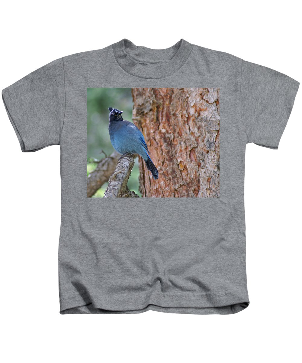 Blue Jay Kids T-Shirt featuring the photograph Blue Jay by Heather Coen