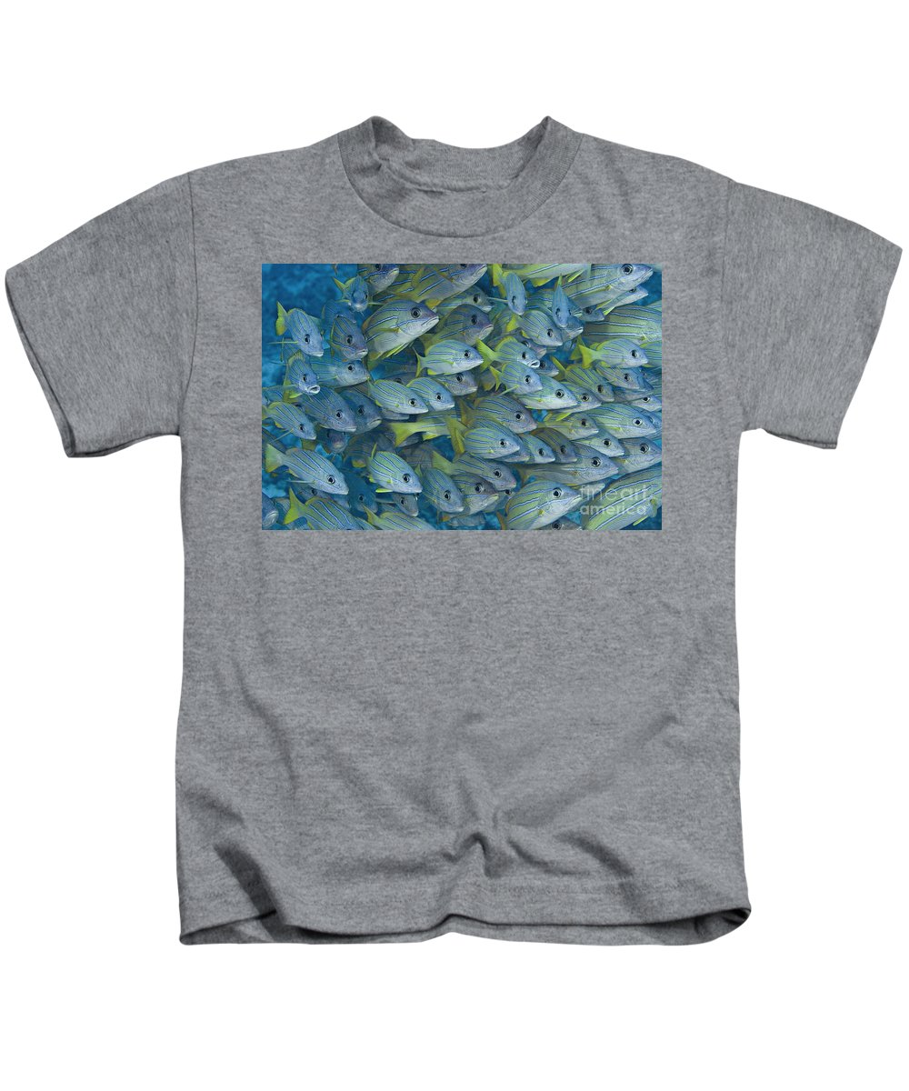 Animal Art Kids T-Shirt featuring the photograph Bluestripe Snapper by Dave Fleetham - Printscapes