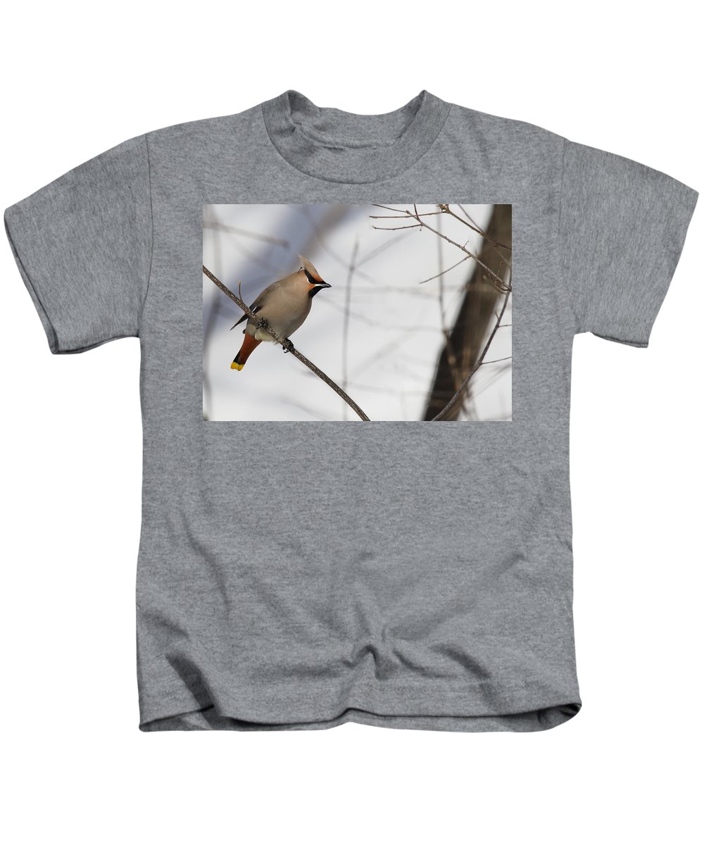 Bohemian Kids T-Shirt featuring the photograph Bohemian Waxwing 2 by Sandy Thompson