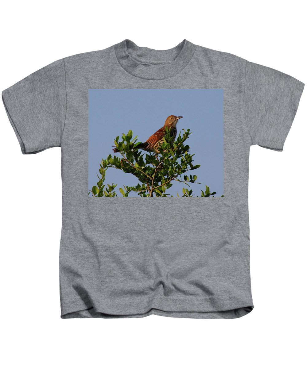 Nature Kids T-Shirt featuring the photograph Brown Thrasher by Peg Urban