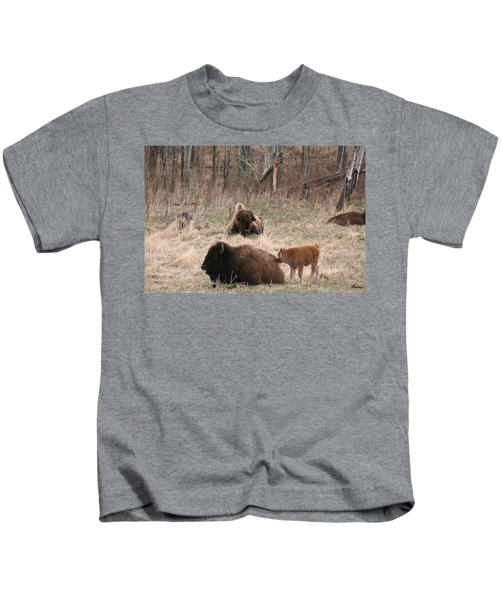 Bison Buffalo Calf Baby Animals Nature Love Native Kids T-Shirt featuring the photograph Buffalo And Calf by Andrea Lawrence