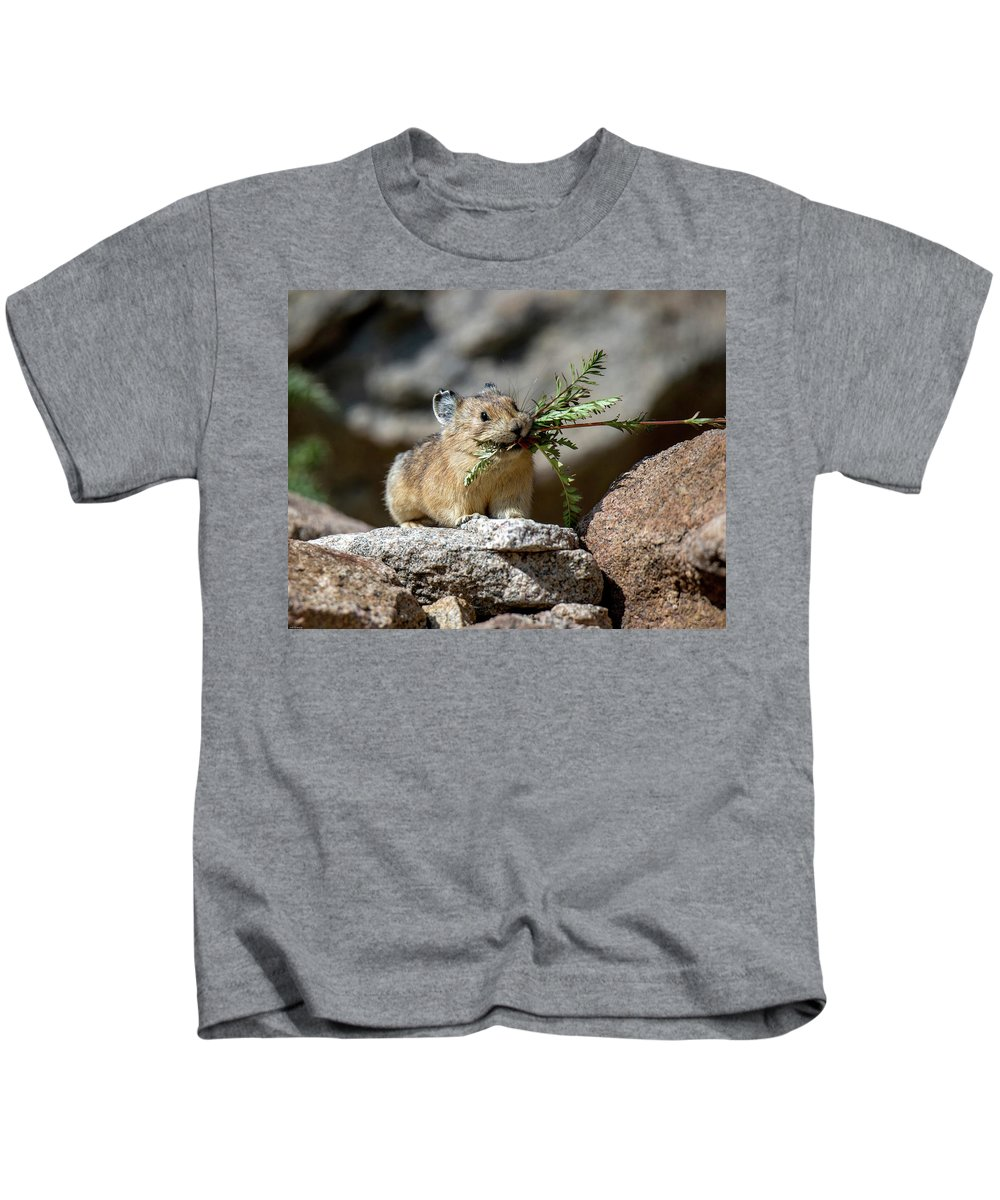 American Pika Kids T-Shirt featuring the photograph Busy As A Pika by Judi Dressler