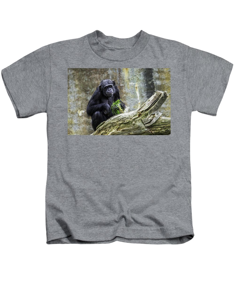 Adult Kids T-Shirt featuring the photograph Chimpanzee Foraging by Levana Sietses
