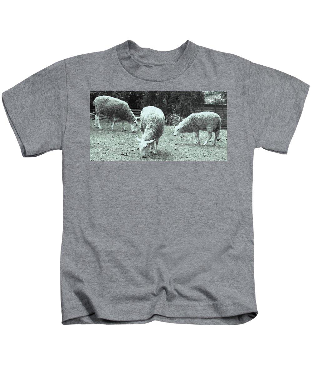 Sheep Kids T-Shirt featuring the photograph Counting Sheep by Ian MacDonald