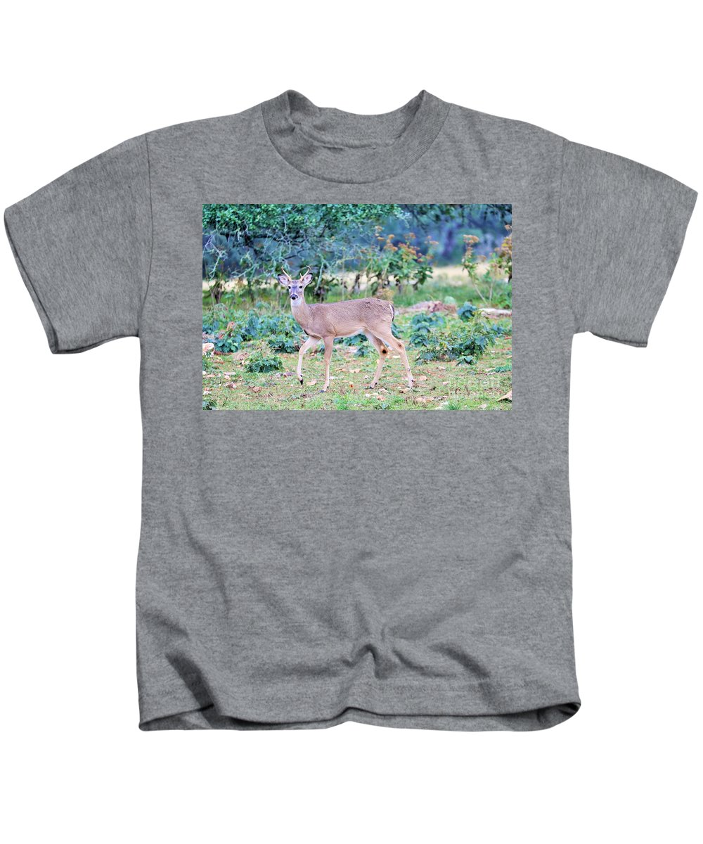 Kids T-Shirt featuring the photograph Deer42 by Jeff Downs
